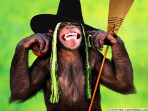 normal_monkey_witch